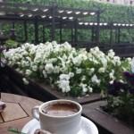 Salaş İstanbul Cafeleri Sirkeci Beltur Cafe 150x150 Salaş Istanbul Cafeleri   Tarihi Yarımada